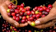 Truyền thông Đức ngạc nhiên về cuộc cách mạng cà phê tại Việt Nam
