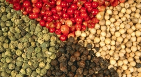 Mùa thu hoạch người trồng tiêu lại lo về giá