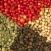 Cục Xuất nhập khẩu: Giá hạt tiêu khó lòng phục hồi trong ngắn hạn
