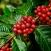 Giá cà phê hôm nay 15/9/2020: Thị trường thế giới lao dốc mạnh, giá cà phê đang bắt đầu chu kỳ mới?