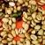 Giá cà phê giảm nhẹ 100 đồng / kg trong ngày 24 tháng 10