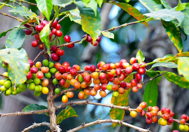 The current state of the global coffee trade